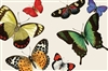 Gorgeous Butterfly Paper Placemats