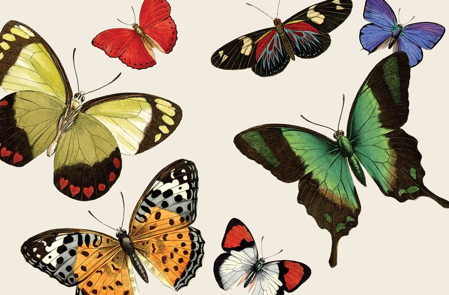 Butterfly Paper Placemats From Cake Vintage Kitchen Papers