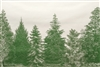 Evergreens Paper Placemats