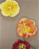 Tulips oil painting on raw linen by Caitlin Coreris